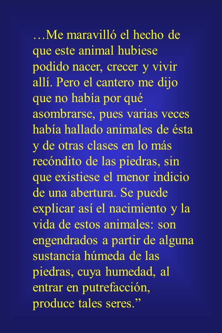 …Me maravilló el hecho de que este animal hubiese podido nacer, crecer y vivir allí.