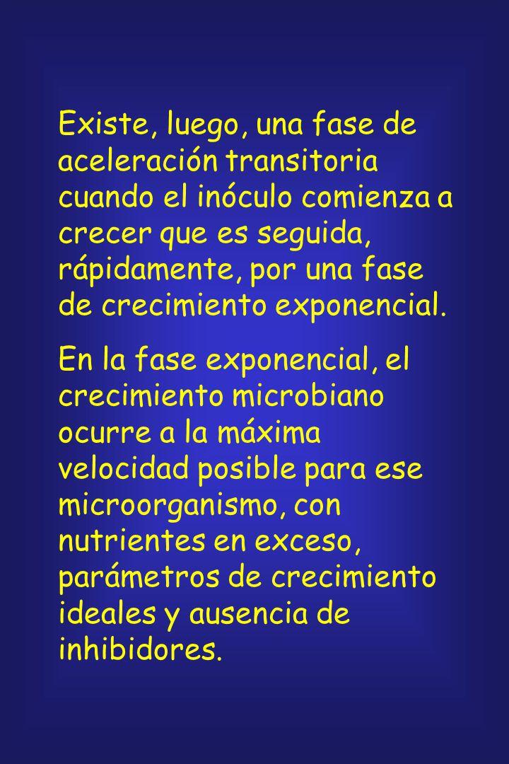 Existe, luego, una fase de aceleración transitoria cuando el inóculo comienza a crecer que es seguida, rápidamente, por una fase de crecimiento exponencial.