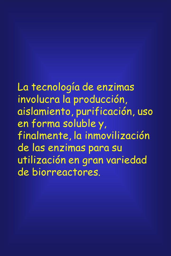 La tecnología de enzimas involucra la producción, aislamiento, purificación, uso en forma soluble y, finalmente, la inmovilización de las enzimas para su utilización en gran variedad de biorreactores.