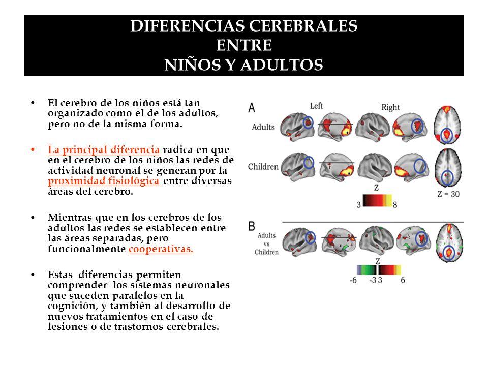 DIFERENCIAS CEREBRALES ENTRE NIÑOS Y ADULTOS