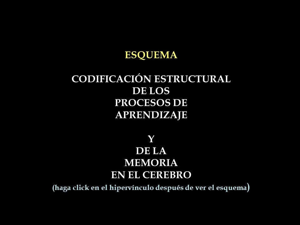 ESQUEMA CODIFICACIÓN ESTRUCTURAL DE LOS PROCESOS DE APRENDIZAJE Y DE LA MEMORIA EN EL CEREBRO (haga click en el hipervínculo después de ver el esquema)