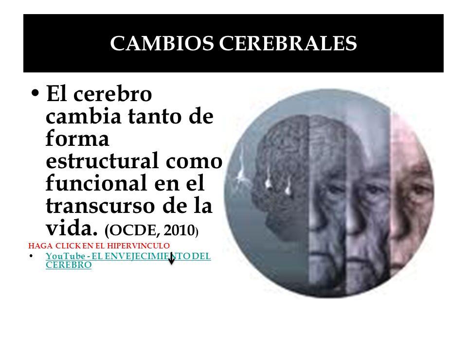 CAMBIOS CEREBRALES El cerebro cambia tanto de forma estructural como funcional en el transcurso de la vida. (OCDE, 2010)