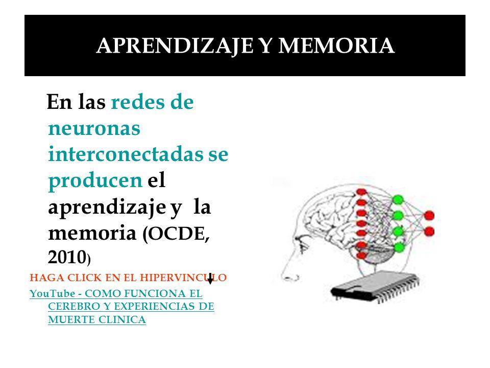 APRENDIZAJE Y MEMORIA En las redes de neuronas interconectadas se producen el aprendizaje y la memoria (OCDE, 2010)