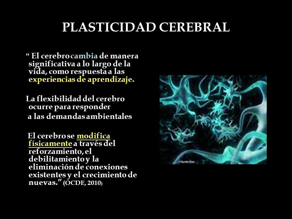 PLASTICIDAD CEREBRAL La flexibilidad del cerebro ocurre para responder