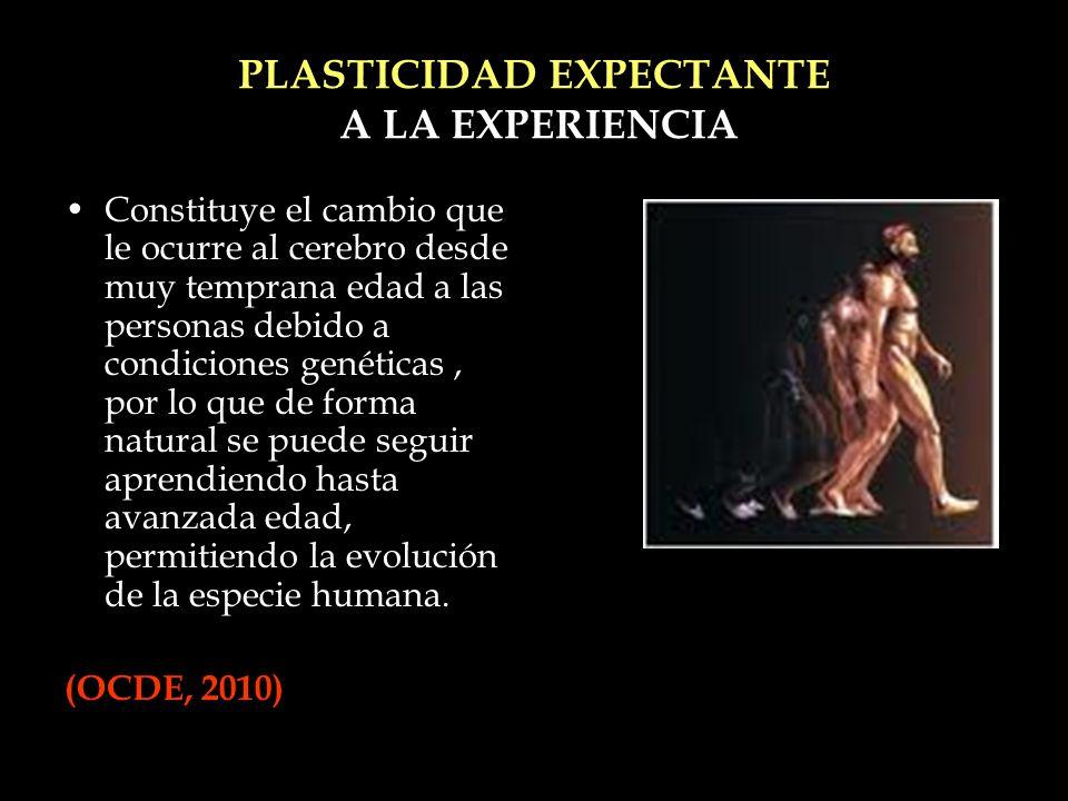 PLASTICIDAD EXPECTANTE A LA EXPERIENCIA