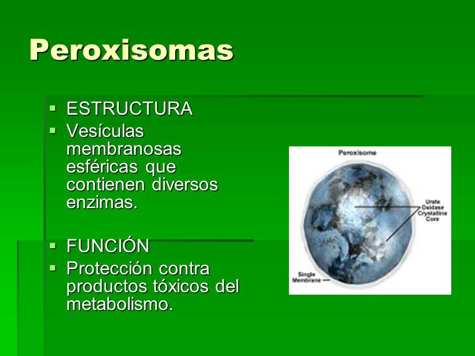 Peroxisomas ESTRUCTURA