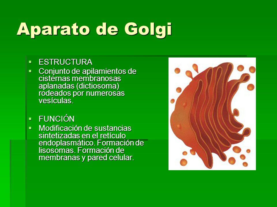 Aparato de Golgi ESTRUCTURA