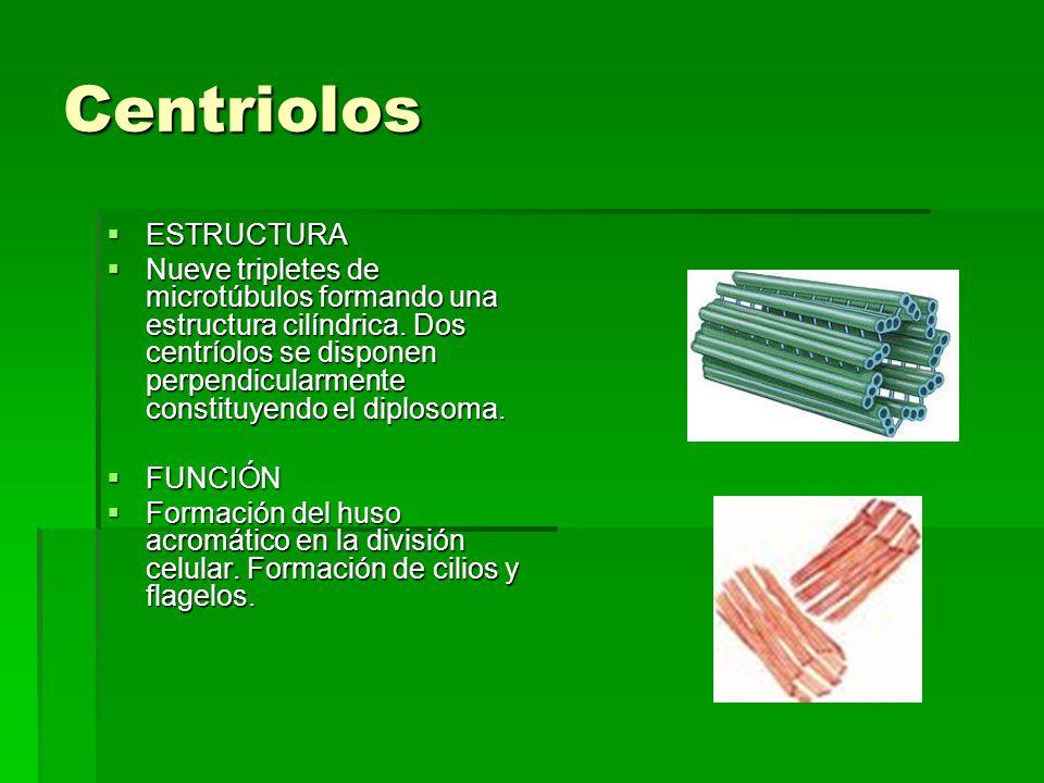 Centriolos ESTRUCTURA