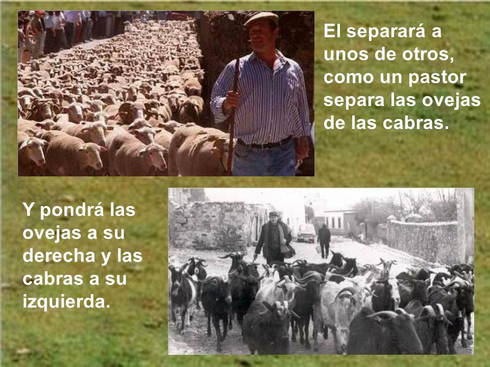 El separará a unos de otros, como un pastor separa las ovejas de las cabras.