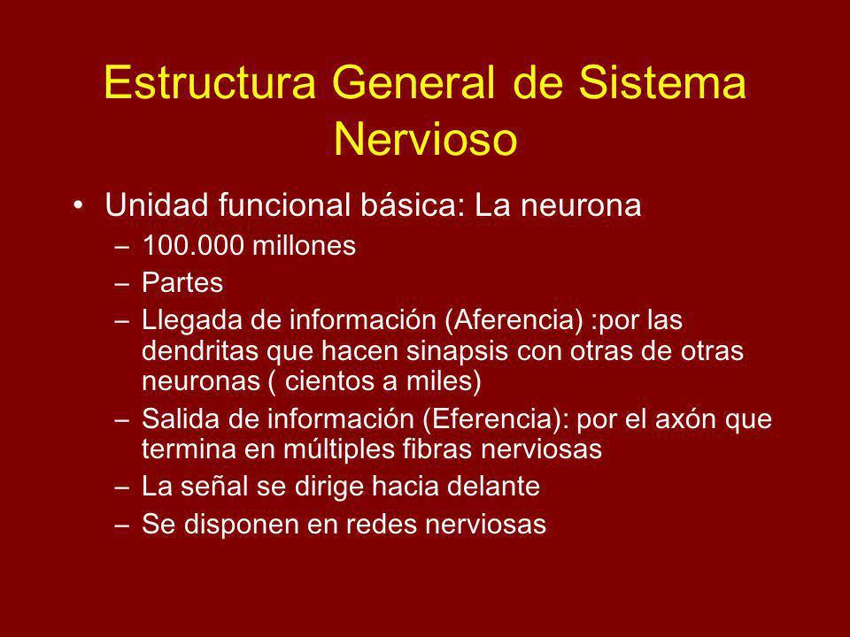 Estructura General de Sistema Nervioso