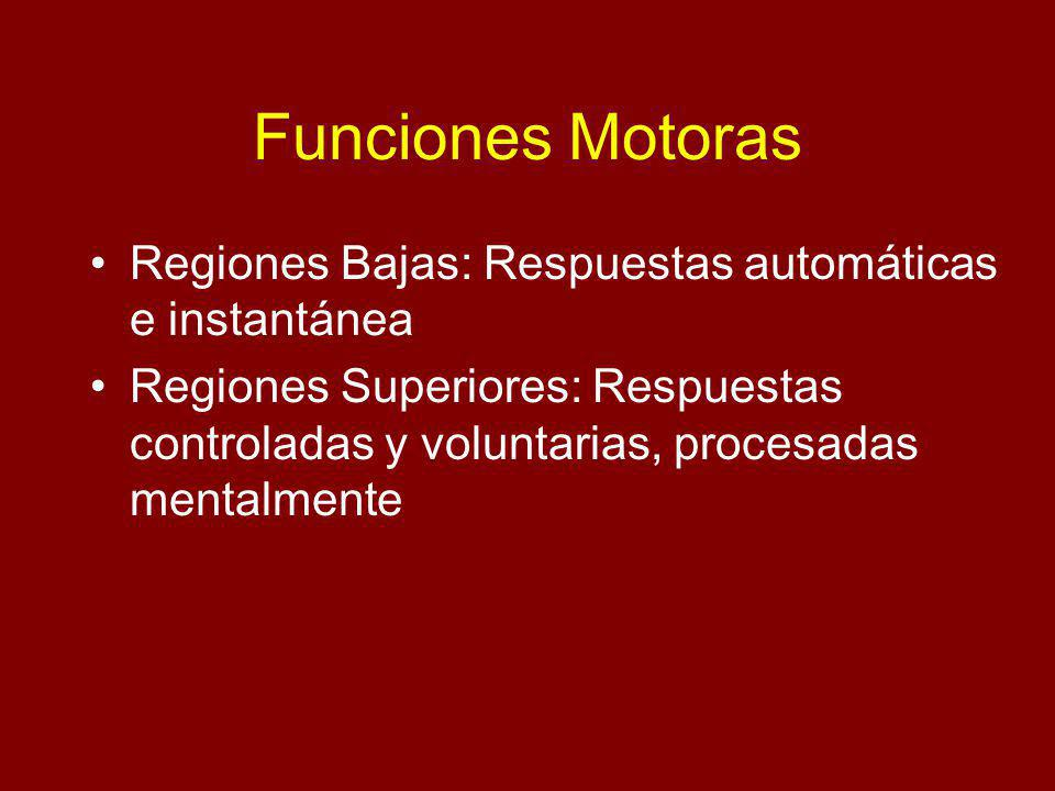 Funciones Motoras Regiones Bajas: Respuestas automáticas e instantánea