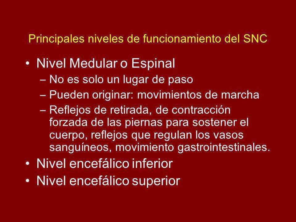 Principales niveles de funcionamiento del SNC