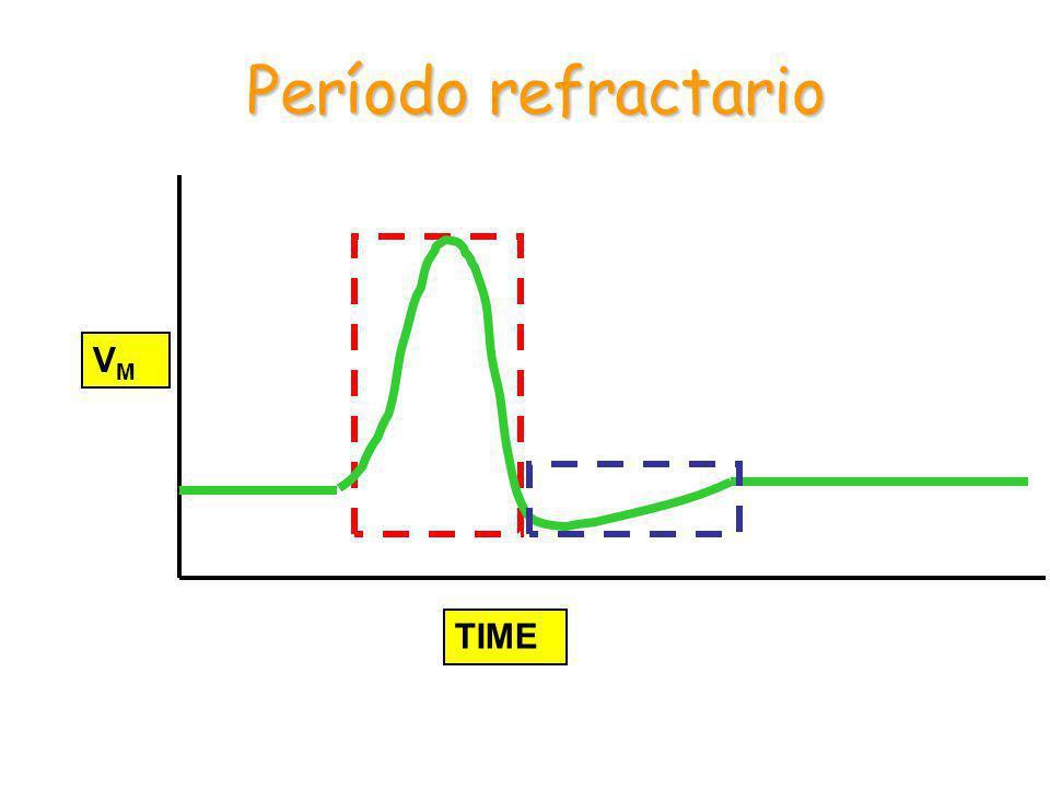 Período refractario VM TIME