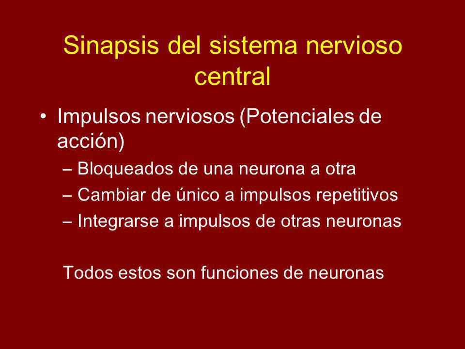 Sinapsis del sistema nervioso central