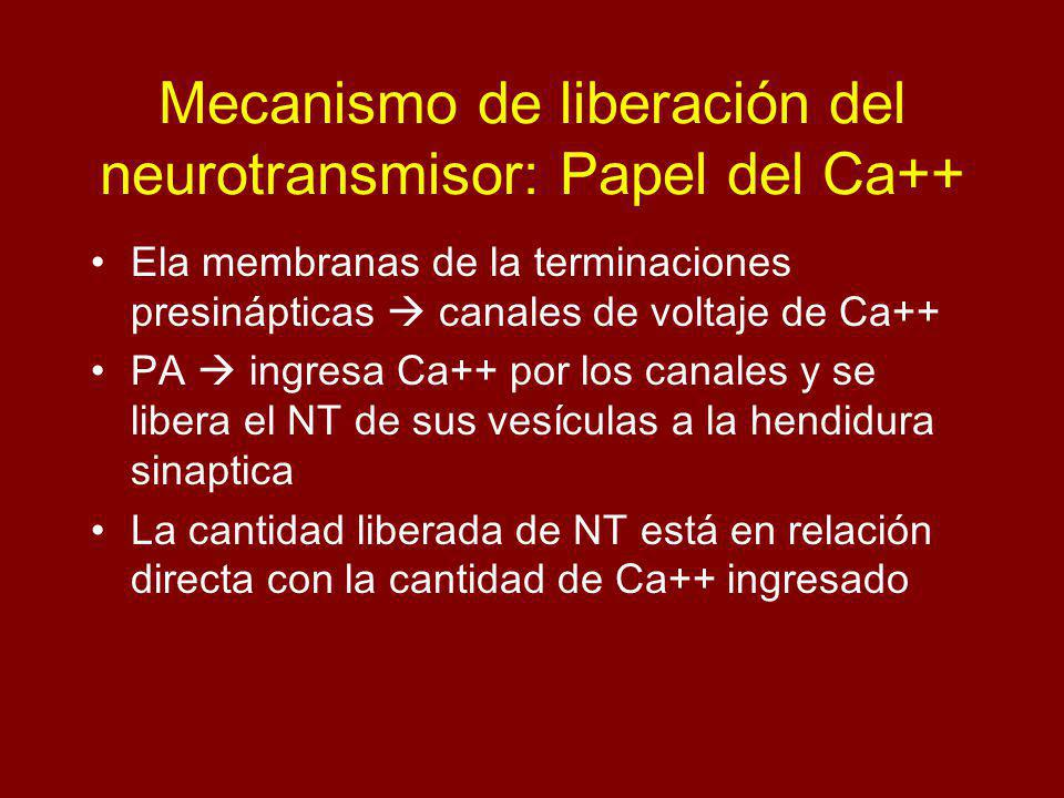 Mecanismo de liberación del neurotransmisor: Papel del Ca++