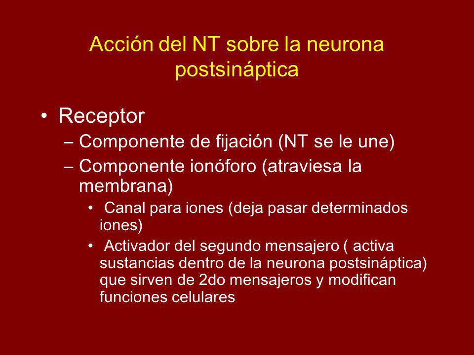 Acción del NT sobre la neurona postsináptica