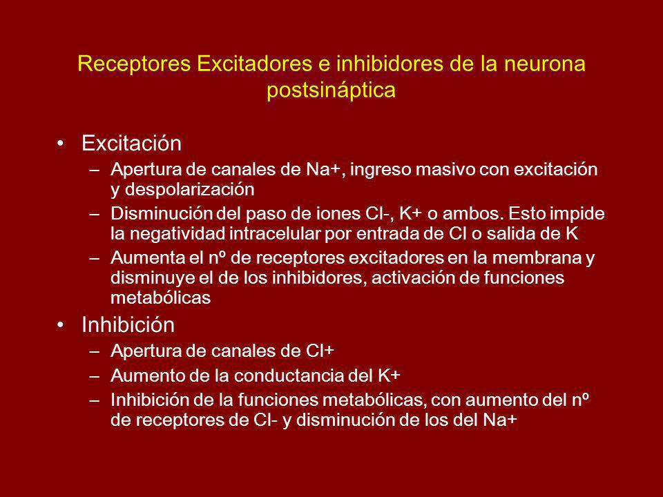 Receptores Excitadores e inhibidores de la neurona postsináptica