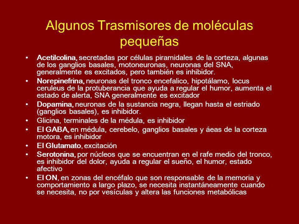 Algunos Trasmisores de moléculas pequeñas