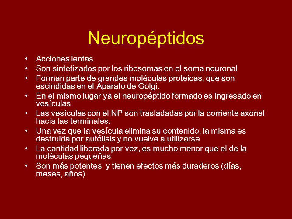 Neuropéptidos Acciones lentas