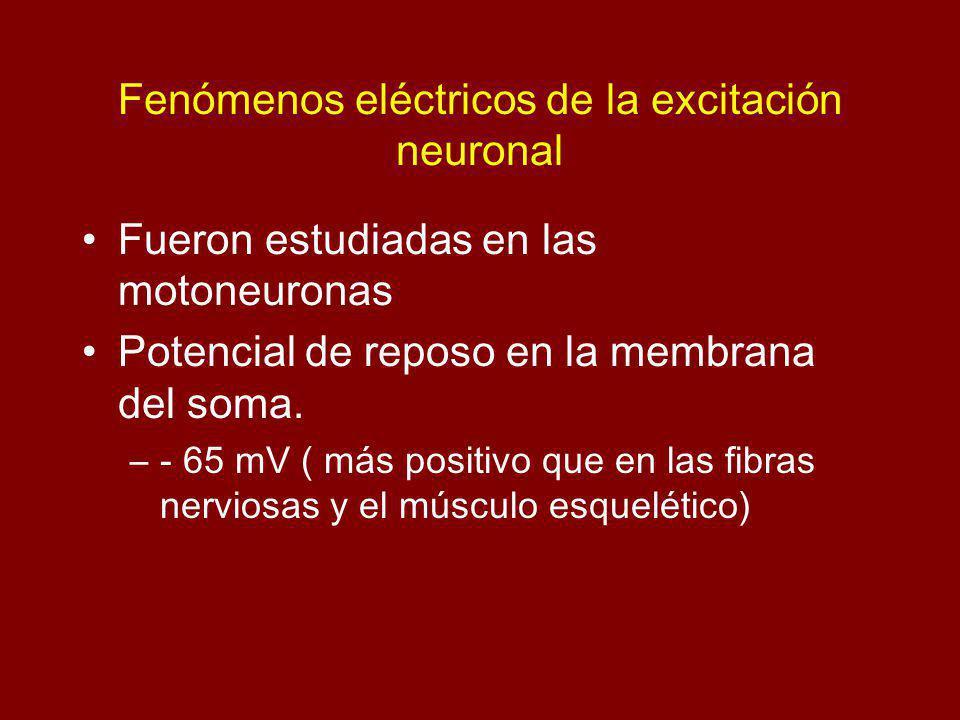 Fenómenos eléctricos de la excitación neuronal