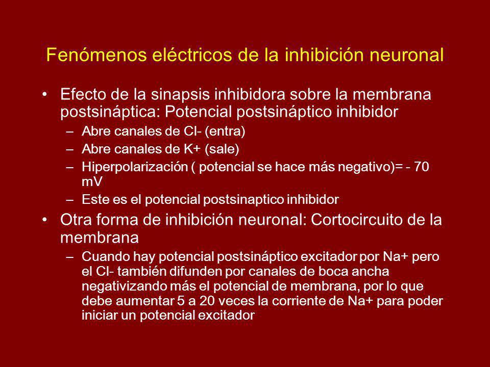 Fenómenos eléctricos de la inhibición neuronal