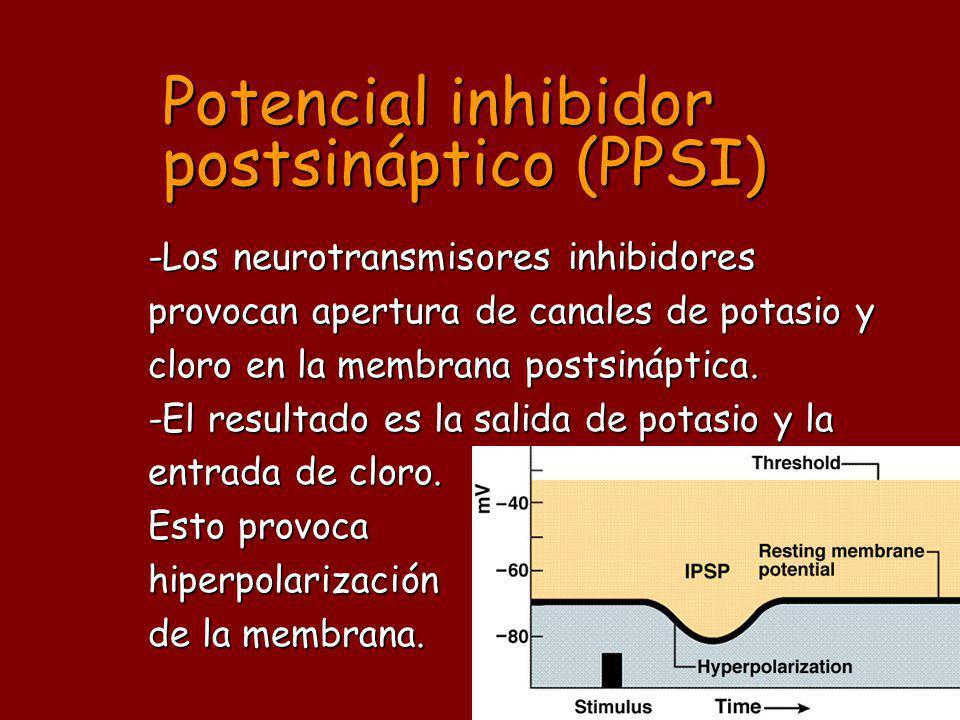 Potencial inhibidor postsináptico (PPSI)