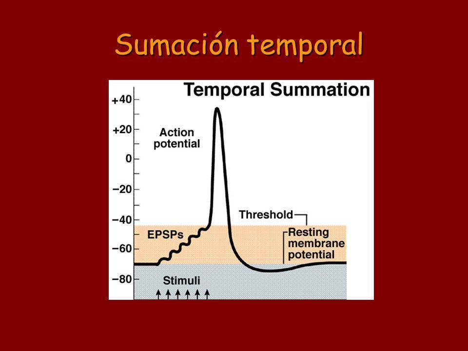 Sumación temporal