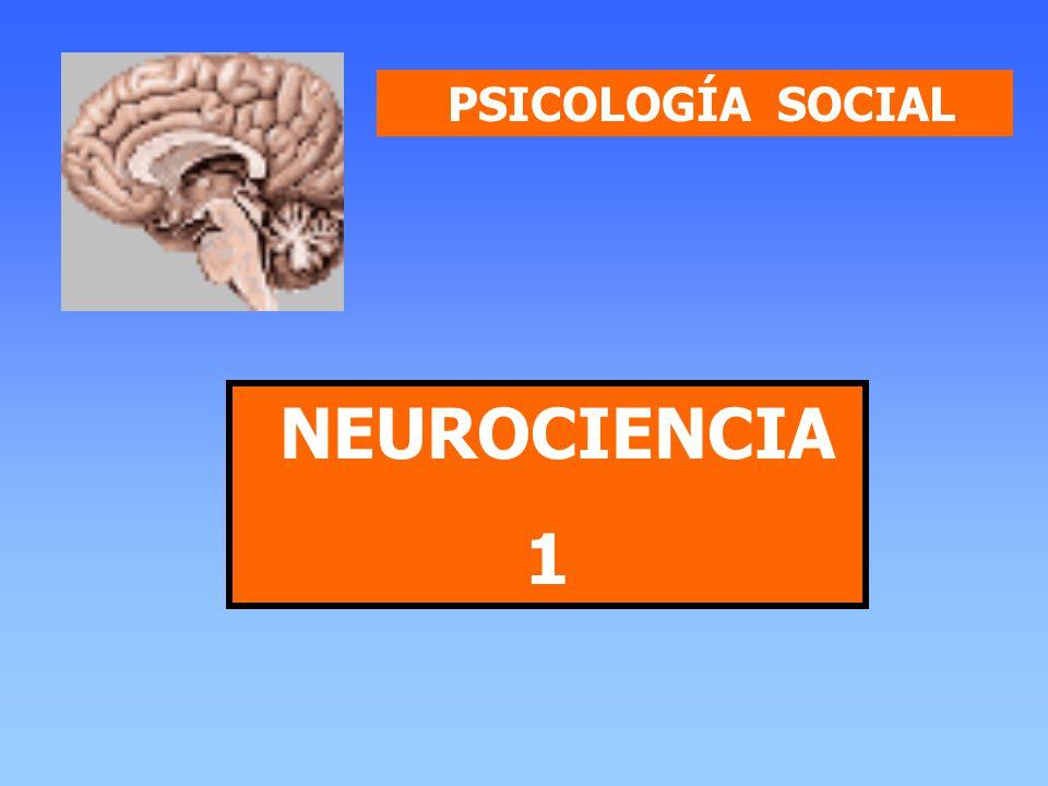 PSICOLOGÍA SOCIAL NEUROCIENCIA 1