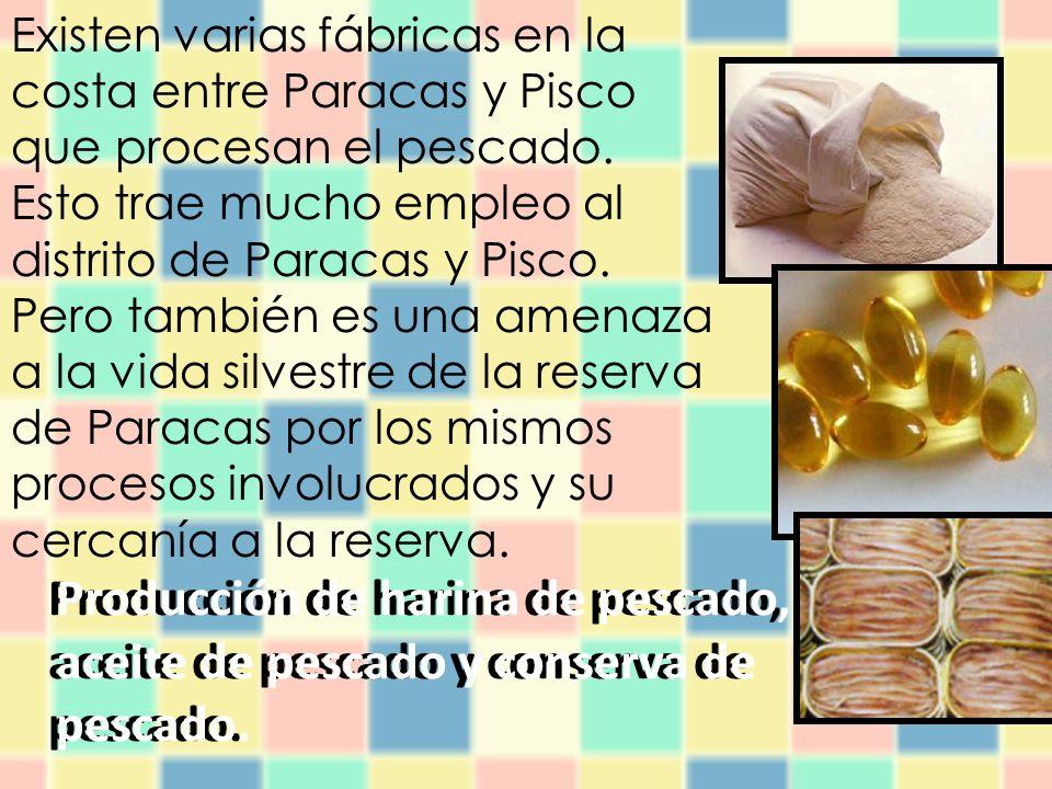 Existen varias fábricas en la costa entre Paracas y Pisco que procesan el pescado. Esto trae mucho empleo al distrito de Paracas y Pisco. Pero también es una amenaza a la vida silvestre de la reserva de Paracas por los mismos procesos involucrados y su cercanía a la reserva.