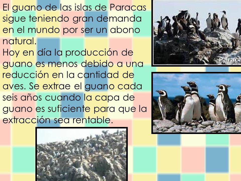 El guano de las islas de Paracas sigue teniendo gran demanda en el mundo por ser un abono natural.