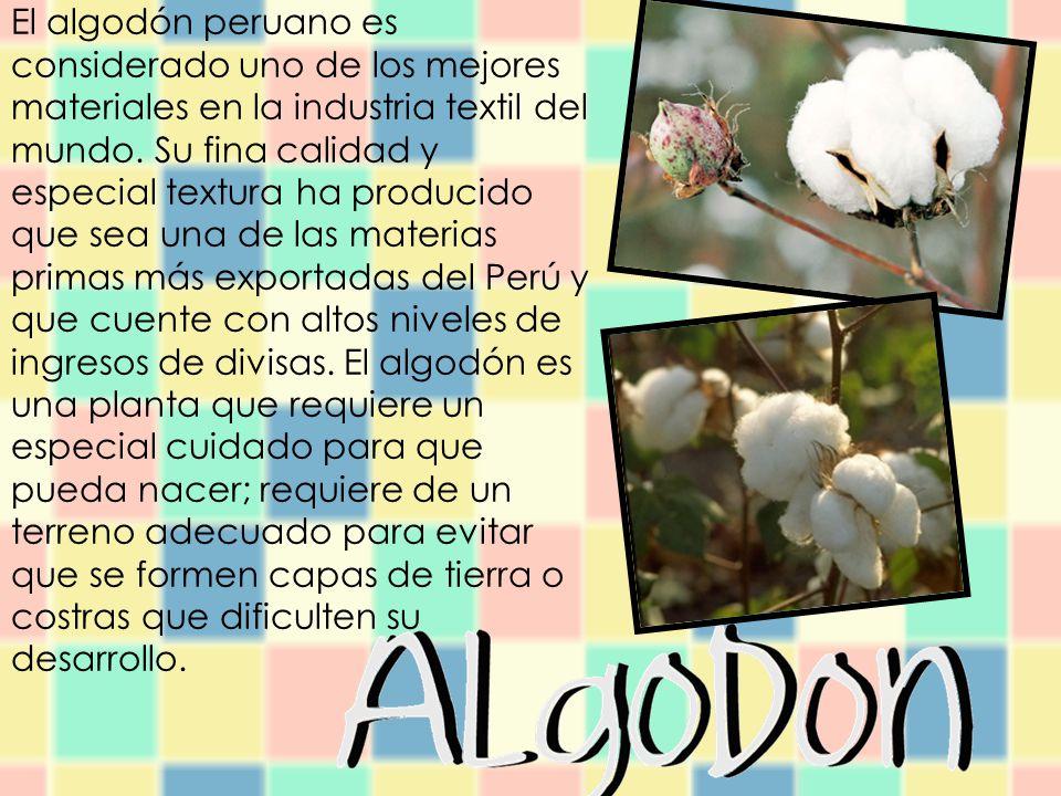 El algodón peruano es considerado uno de los mejores materiales en la industria textil del mundo.