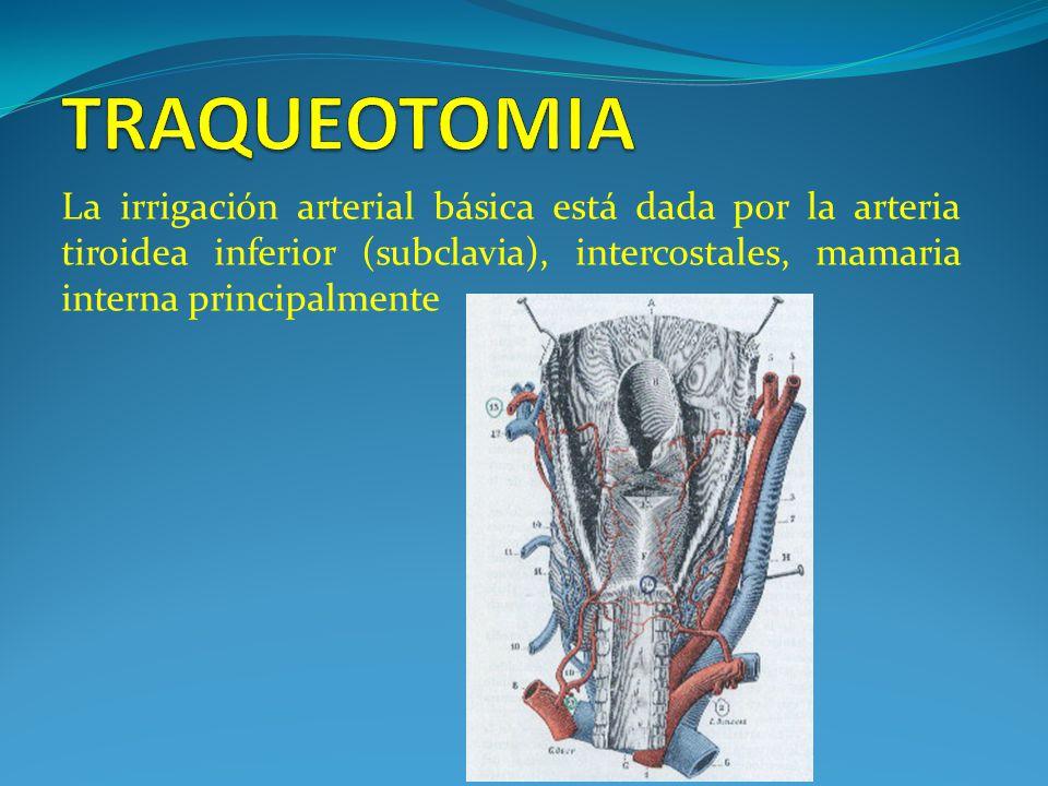 TRAQUEOTOMIA La irrigación arterial básica está dada por la arteria tiroidea inferior (subclavia), intercostales, mamaria interna principalmente.