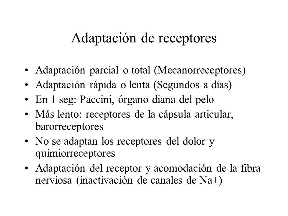 Adaptación de receptores