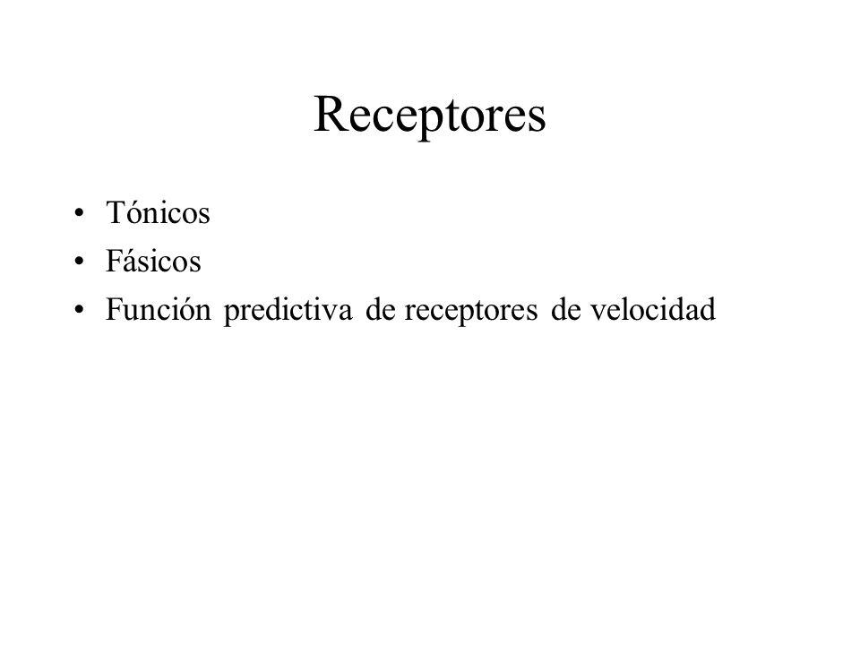 Receptores Tónicos Fásicos