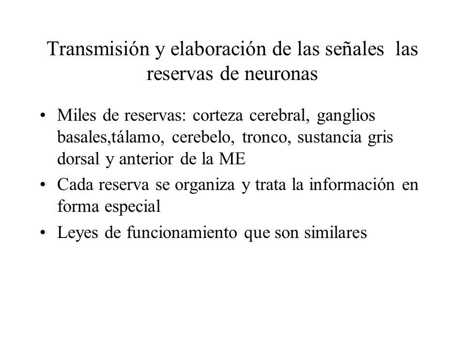 Transmisión y elaboración de las señales las reservas de neuronas
