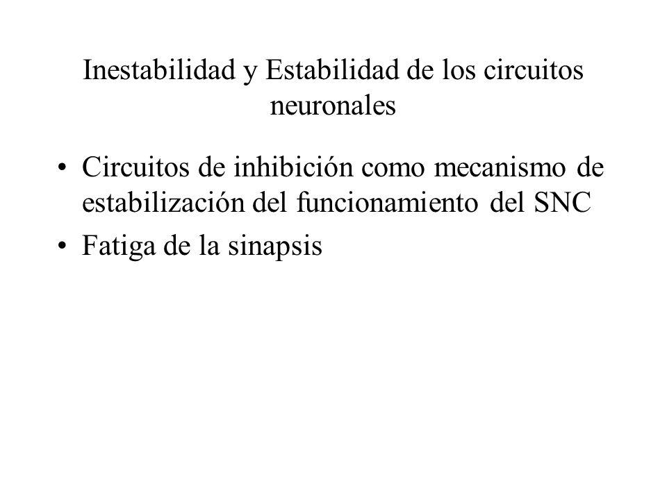 Inestabilidad y Estabilidad de los circuitos neuronales