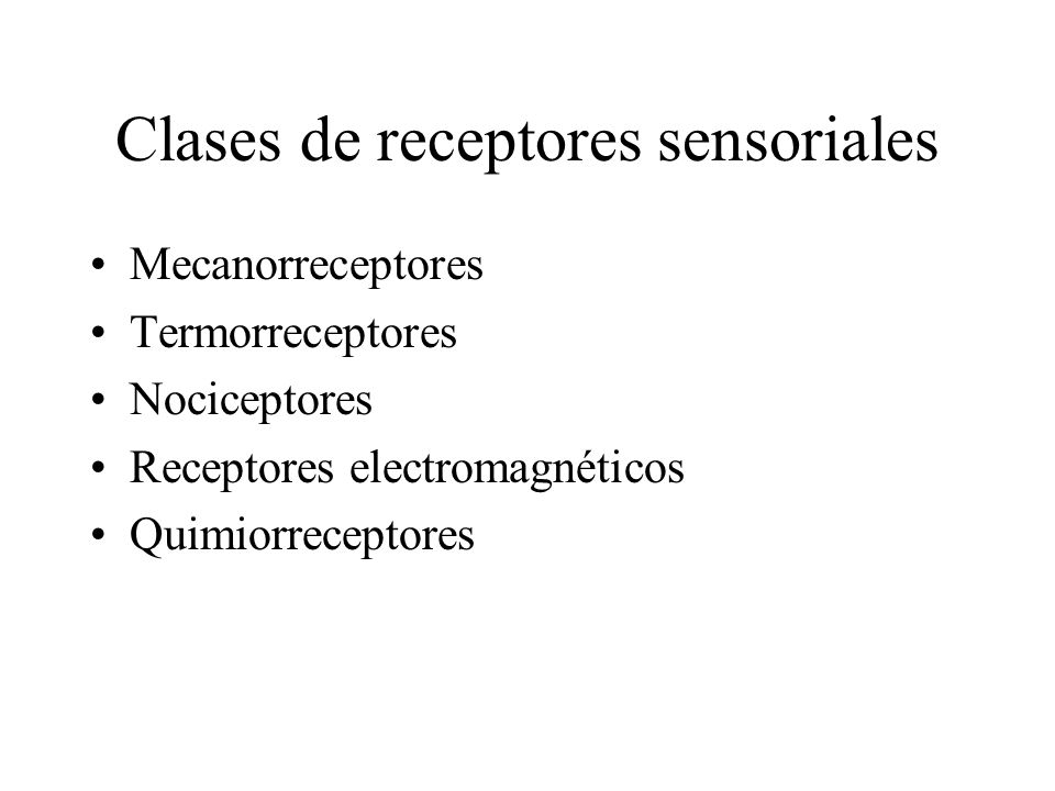 Clases de receptores sensoriales