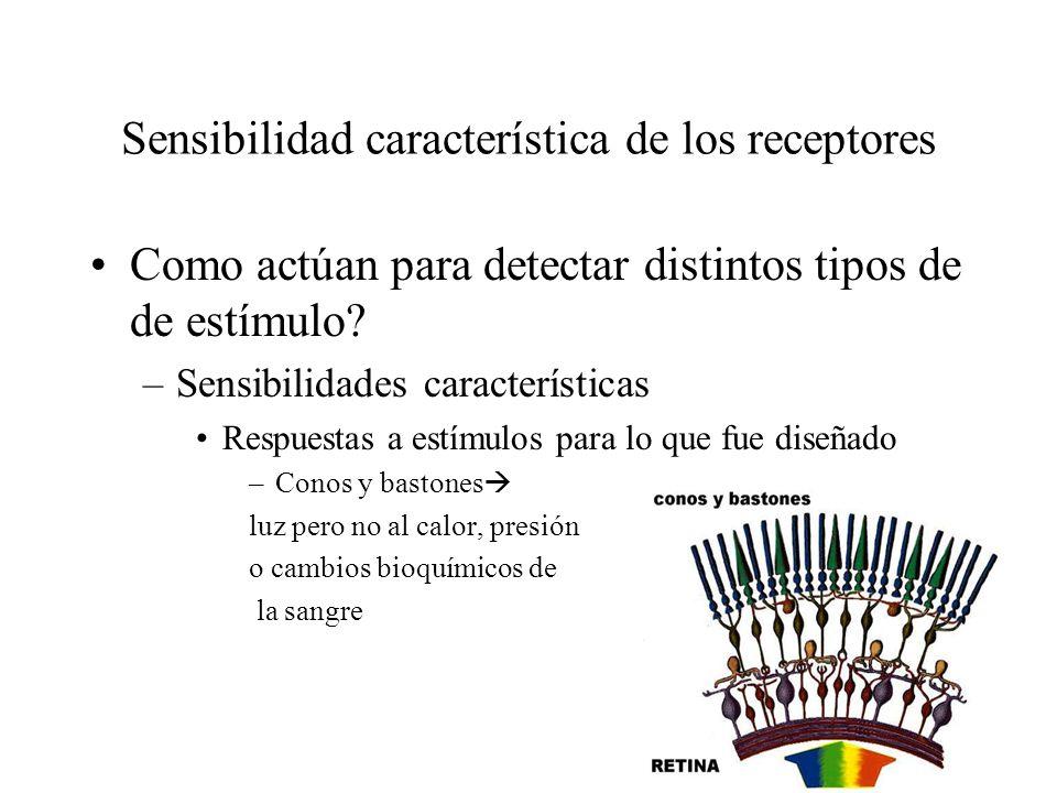 Sensibilidad característica de los receptores