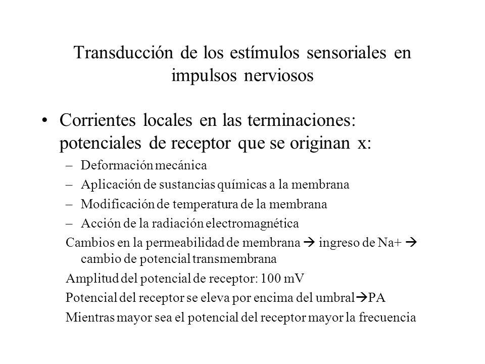Transducción de los estímulos sensoriales en impulsos nerviosos