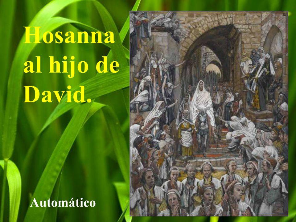 Hosanna al hijo de David.