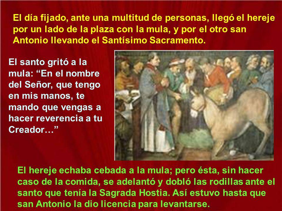 El día fijado, ante una multitud de personas, llegó el hereje por un lado de la plaza con la mula, y por el otro san Antonio llevando el Santísimo Sacramento.