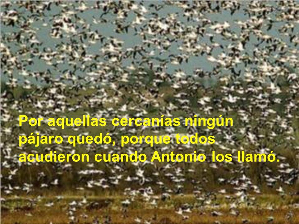 Por aquellas cercanías ningún pájaro quedó, porque todos acudieron cuando Antonio los llamó.