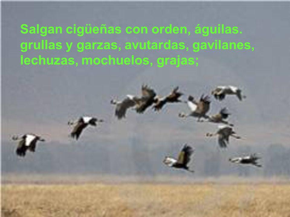 Salgan cigüeñas con orden, águilas