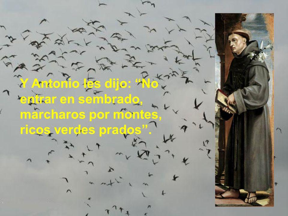 Y Antonio les dijo: No entrar en sembrado, marcharos por montes, ricos verdes prados .