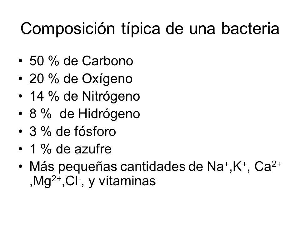 Composición típica de una bacteria