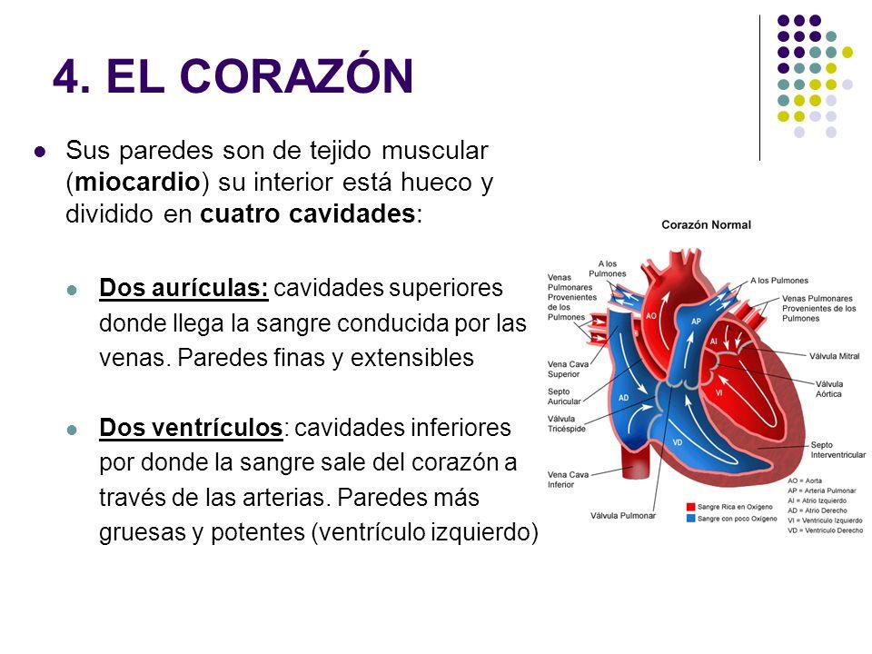 4. EL CORAZÓN Sus paredes son de tejido muscular (miocardio) su interior está hueco y dividido en cuatro cavidades: