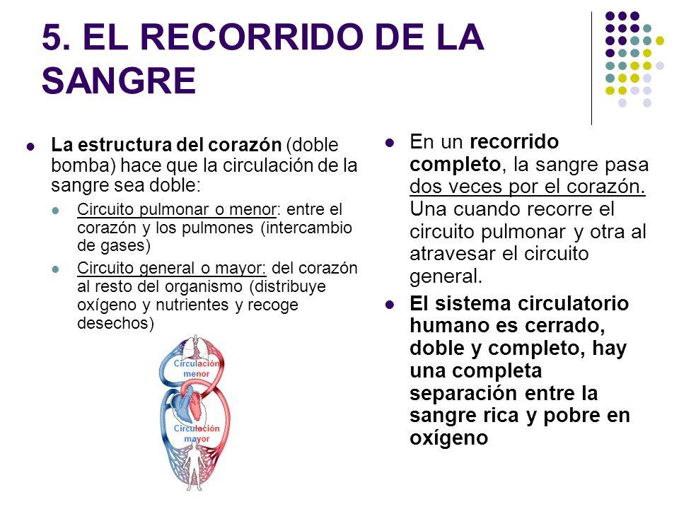 5. EL RECORRIDO DE LA SANGRE