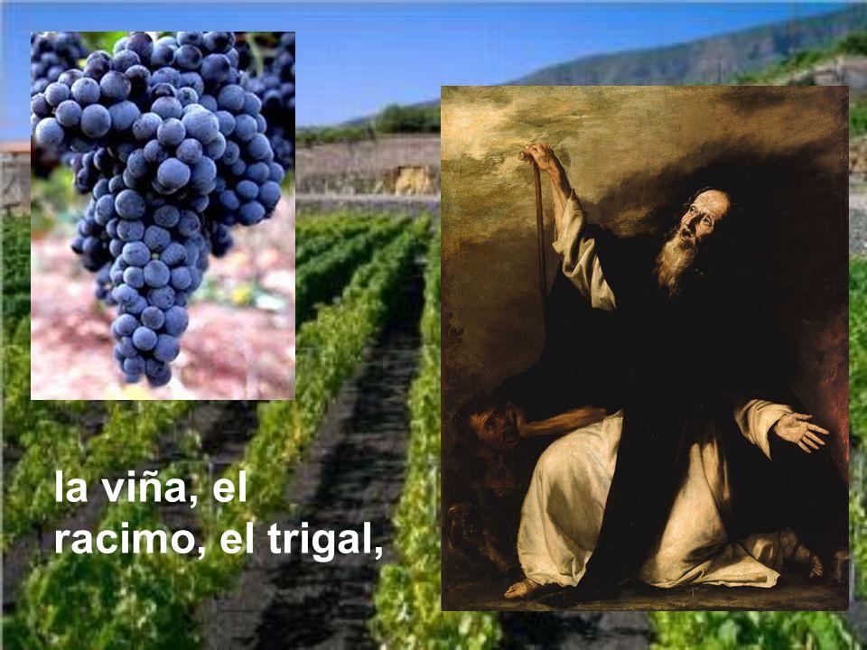 la viña, el racimo, el trigal,