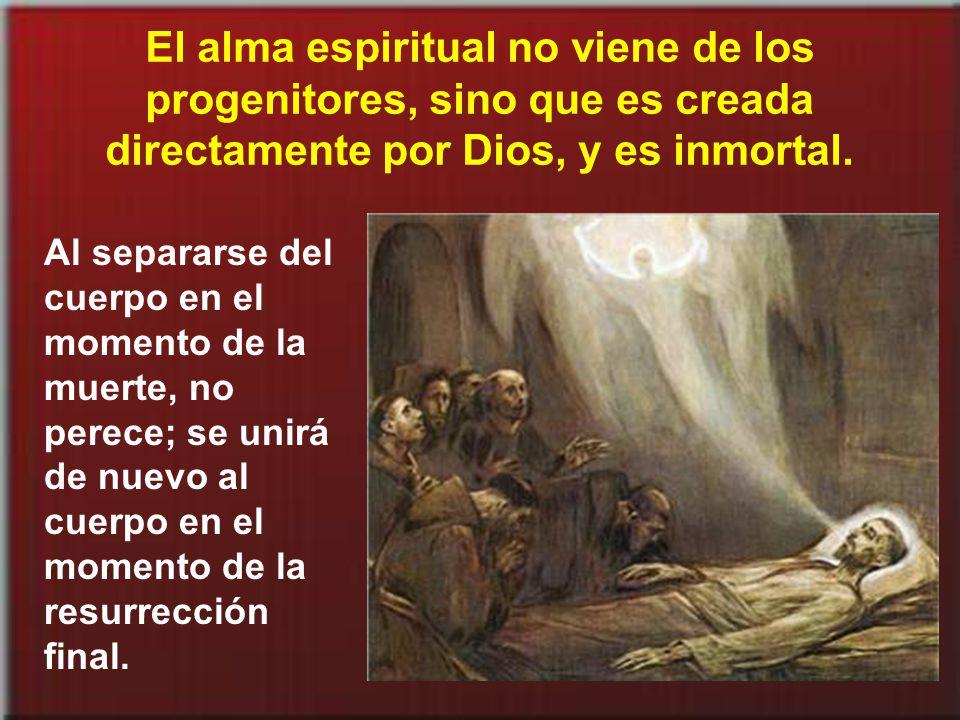 El alma espiritual no viene de los progenitores, sino que es creada directamente por Dios, y es inmortal.