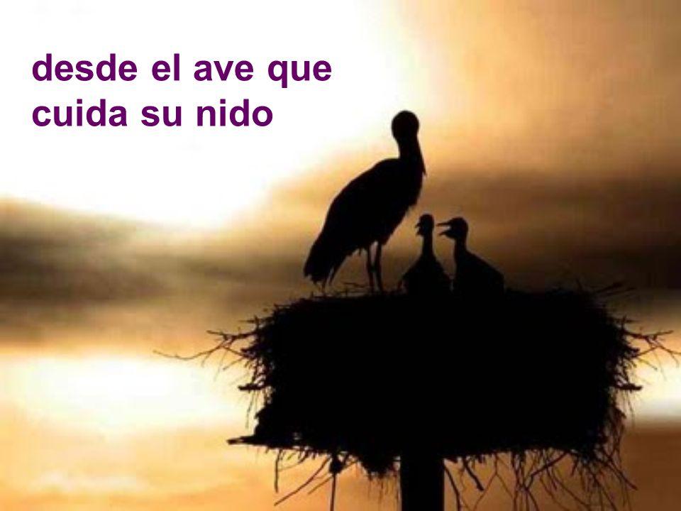desde el ave que cuida su nido